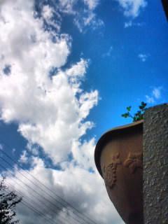 空が高い。