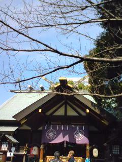 東京大神宮。